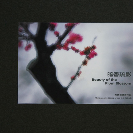 Beauty of the Plum Blossom